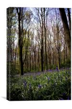More Bluebells, Canvas Print