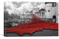 Poppy cascade - Red, Canvas Print