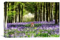 Fox and The Bluebells, Canvas Print