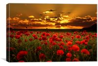 Sunset Poppies The BBMF, Canvas Print