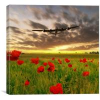 Lancaster Poppy Field, Canvas Print