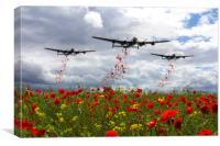 Lancaster Remembrance - Poppy Drop, Canvas Print