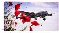 Lancaster Poppy Approach, Canvas Print