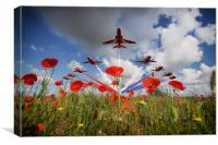 Red Arrows Poppy Fly Past, Canvas Print