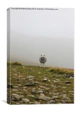 Demon sheep of Helvellyn, Canvas Print
