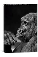 Mr Chimp, Canvas Print