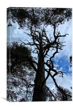 Spikey tree., Canvas Print