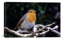 European Robin, Canvas Print
