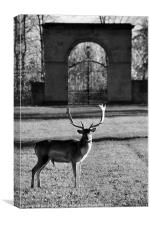 Lone Stag