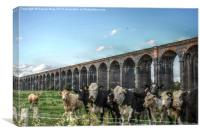 HDR Cows Under The Arches, Canvas Print