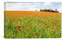 Poppies in England, Canvas Print
