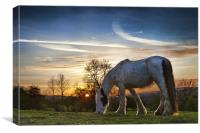 Meadow Grazers, Canvas Print