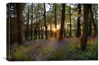 Bluebell Sundown, Canvas Print