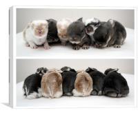 Shuffling Bunnies, Canvas Print