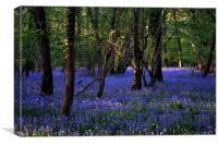 Blue forest carpet, Canvas Print