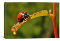 lady bird on young bud