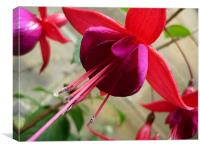 Bright Pink Flower - Fuchsia, Canvas Print