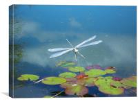 Silver Dragonfly., Canvas Print