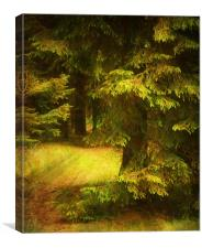 Heart of the Forest., Canvas Print