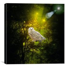 The Owls Hideaway., Canvas Print