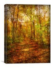 Autumn Canopy., Canvas Print