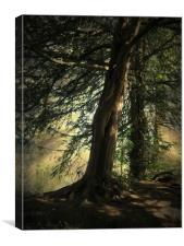 Forest Awakening., Canvas Print