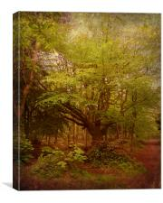 My Old Friend in Spring., Canvas Print