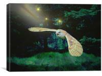 Night Owl., Canvas Print