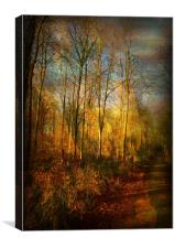 Hunter's Wood., Canvas Print