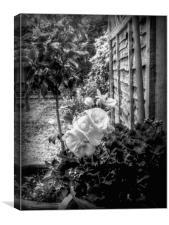 Potted Geranium., Canvas Print