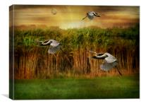 Dance of the Herons., Canvas Print