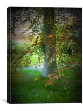 Bluebell Wood., Canvas Print