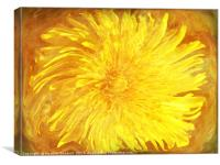 Sunshine Dandy, Canvas Print