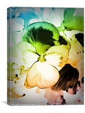 Rainbow Pansy, Canvas Print