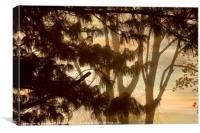 Misty Tangle, Canvas Print