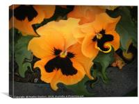 Pansies, Canvas Print