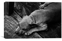 Sleep Soi Dog