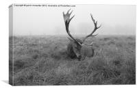 stag at richmond park on a foggy day, Canvas Print
