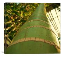 bamboo, Canvas Print