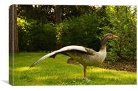 grey goose at kew, Canvas Print