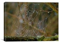 Morning Dew on Spiders web, Canvas Print