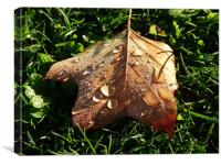 Autumn Dew, Canvas Print