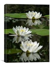 Study of Waterlilies, Canvas Print