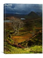 Lone Tree, The Quiraing, Canvas Print