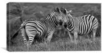 Zebra Love, Canvas Print