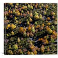 Autumn Patchwork, Canvas Print