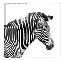 Zebra, Canvas Print