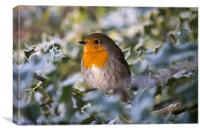 Robin In Holly, Canvas Print