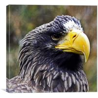 Steller's Sea Eagle, Canvas Print
