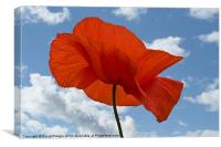 Poppy and Summer Sky, Canvas Print